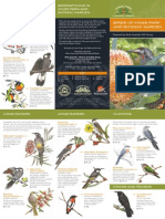 Kp Birds v0313