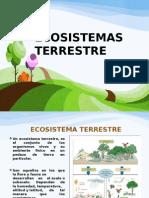 Ecosistemas Terrestres Felipe Lema Expo 2