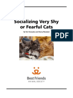 Socializing Very Shy or Fearful Cats