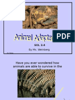 Animal-Adaptations-PPT.ppt