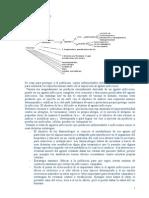 Inmunologia23[2].doc