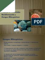 Basidiomycota ppt