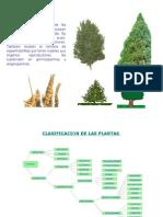Clasificación Vegetal