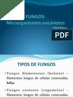 Aula Fungos