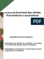 Anatomia funcional das celulas Procarioticas e eucarioticas - CLARK