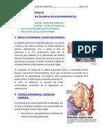 Sistema Endocrino III
