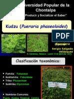 Kudzu (Pueraria phaseoloides)