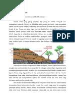 Cara Penentuan Umur Fosil