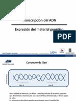 Transcripción de ADN