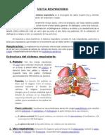Sistema Respiratorio