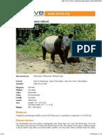 Asian tapir factsheet on ARKive - Tapirus indicus.pdf