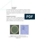 penicillium expansum caracteristicas