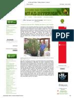 A Febre Das Plantas - Plantas de Interior_ Crássula