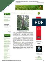 A Febre Das Plantas - Plantas de Interior_ Plantas de Interior e Exterior - Ficus Elastica Ou Árvore-da-borracha