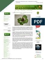 A Febre Das Plantas - Plantas de Interior_ Plantas de Interior Equinas - Farfugium Japonicum Var