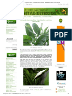 A Febre Das Plantas - Plantas de Interior_ Plantas de Interior Pacíficas - Spathiphyllum Wallisii Ou Lírio-da-paz