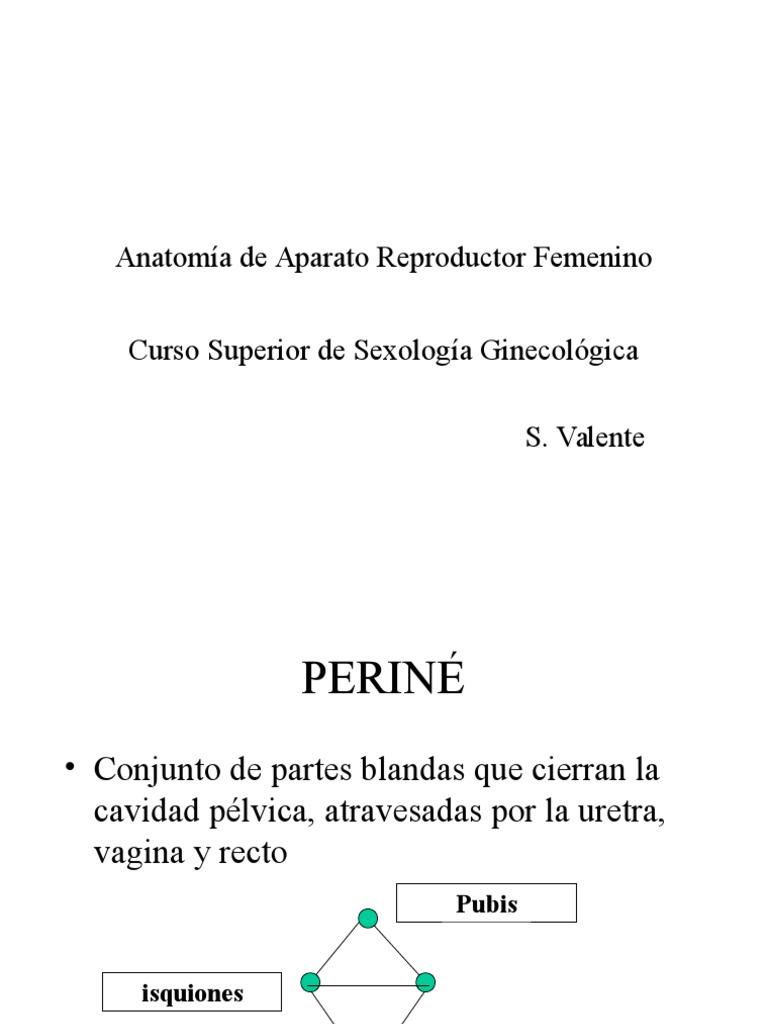 Anatomia de Aparato Reproductor Femenino. A