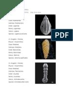 Klasifikasi Foraminifera