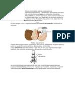 APOSTILA Morfo e Anat Vegetal Completa I