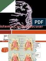 Slide Embriologia - Sist. Cardíaco