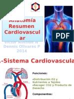 Ayudantia anatomia cardiovascular