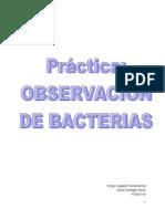 Práctica- Observación de Bacterias