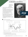 Sistema Nervioso Santillana