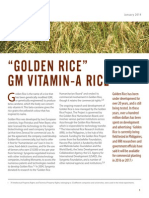 Golden Rice Factsheet Cban Web
