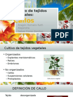Cultivo de Callos.pptx