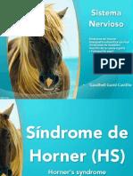 Sindromes Sinstema Nervios Key