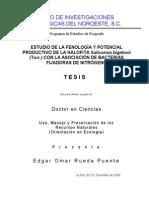Estudio de La Fenologia y Potencial Productivo de La Halofita Salicornia Bigelovii