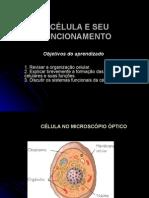 Celula e Seu Funcionamento