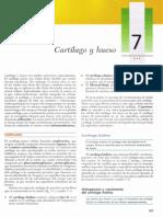 Gartner, Leslie P. - Texto Atlas de Histologia, 2da Edicin [7 Cartlago y Hueso]