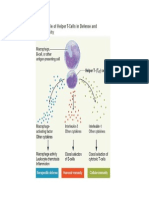 The Role of the Helper T Cells