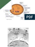 Antimicobacterianos y Antivirales