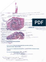 Histologie preparate2