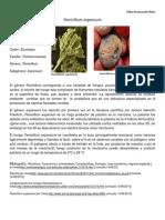 penicillium expansum