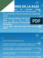 FUNCIONES DE LA RAIZ.pptx