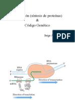 Traduccion y Codigo Genetico