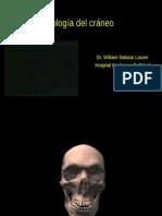 radiografia del craneo