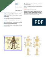Diptico - Sistema Oseo