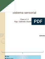 5.- Sistema Sensorial