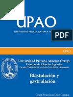 blastulacion y gatrulacion TEMA 5.pdf