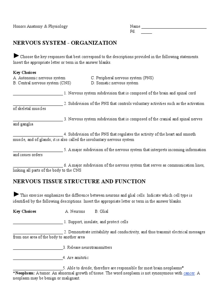 1. Nervous System Worksheet | Nervous System | Neuron