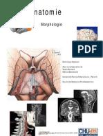 Neuro Anatomie