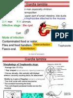 3- Giardia Lamblia
