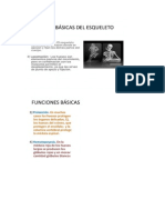 Anatomia Grupo3490c