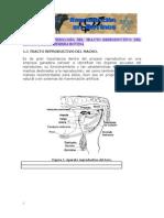 1.Anatomia y Fisiologia.doc (1)