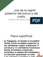 12.2 Musculo de La Region Posterior y Cuello