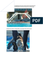 Pictures of Killer Whale Abuse at SeaWorld